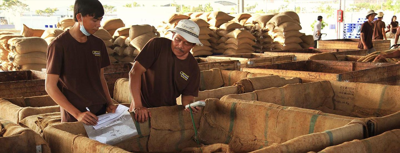 Góp phần cải thiện đời sống người trông cây cacao tại Việt Nam